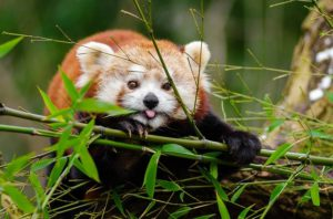 Animal feeding on leaves